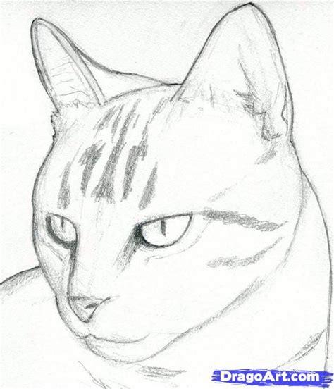 draw  cartoon cat  pictures wikihow
