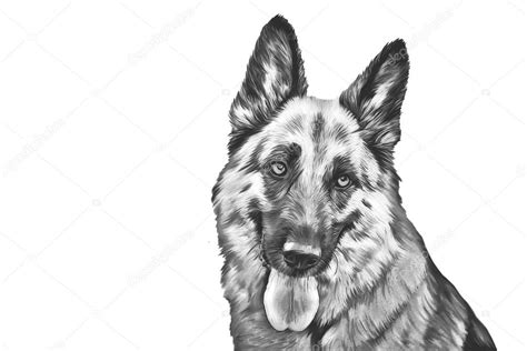 Hondenhoofd Kleurplaat by Dessin Du Chien Berger Allemand Photographie Averyanova
