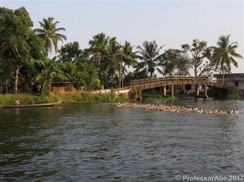 August 2 2017 Duck Herding In The Kerala Backwaters