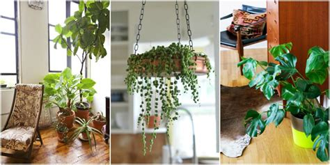 Greenery For Your Home