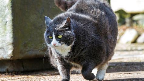 how to fatten up a kitten