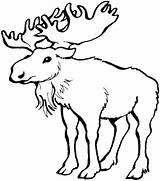 Moose Coloring Pages Drawing Outline Printable Antlers Colouring Easy Adult Animals Related Posts Craft Drawings Getdrawings Paintingvalley sketch template