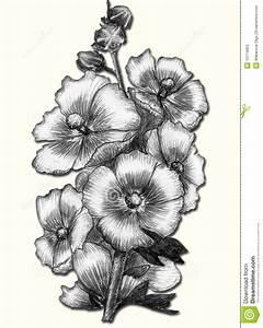 All Types Flowers Pencil Drawings Flower Drawings In Black ...