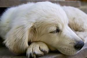Enlever Odeur Urine Chien : comment enlever l odeur de chien dans une maison ~ Nature-et-papiers.com Idées de Décoration