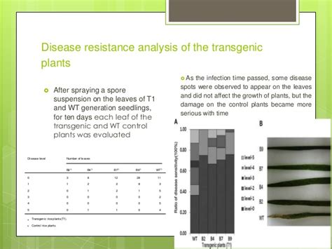 Enhanced Resistance To Blast Fungus In Rice
