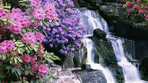 Azaleas and rhododendrons, Crystal Springs Garden ...