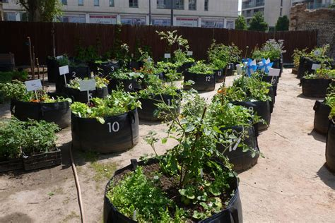 urban gardening tips  products   space starved