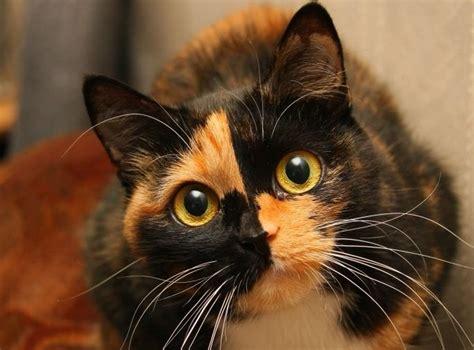 calico cat female names paws