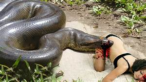 World's biggest python snake found on Earth - Giant ...