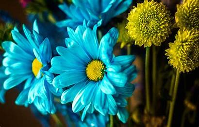 Macro Petals Bouquet Paint вконтакте Telegram