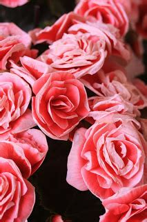 knit jones les fleurs