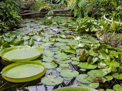 Botanischer Garten Kiel Ausbildung by Botanische G 228 Rten Garten Europa