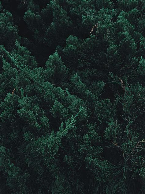 beautiful dron of forest forest wallpaper iphone