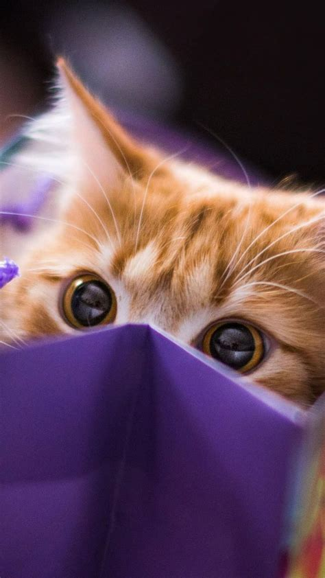 purple cat aesthetic wallpapers top  purple cat