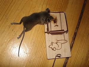 Wie Fängt Man Eine Maus : blog von alexander k chler mit speck f ngt man m use aber bitte gebraten ~ Markanthonyermac.com Haus und Dekorationen