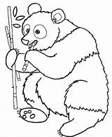 Coloring Panda Pages Cute Bamboo Eating Bear Wild Animal Popular sketch template