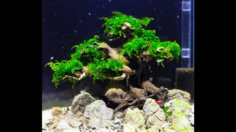 'Bonsai tree' aquascape step by step - YouTube