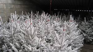 Sapin Floqué Blanc : rochefort sapins le sp cialiste du sapin blanc floqu ou enneig ~ Melissatoandfro.com Idées de Décoration