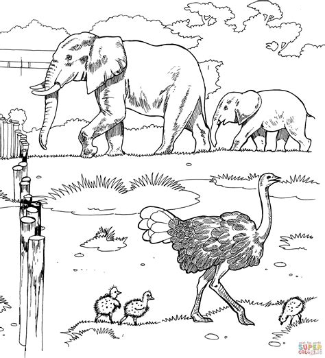 ostriches and elephants in a zoo coloring page free