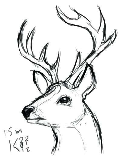 Image Result For Easy Draw Deer Head Art