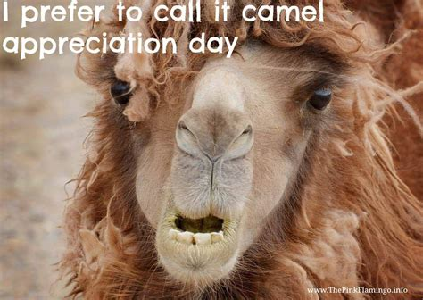 Camel Appreciation Day #humpday #camel