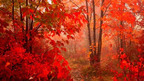 Fall Chrome Backgrounds by Autumn Leaves 2017 Wallpapers Wallpaper Cave