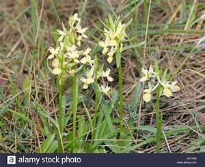 Alpenveilchen Gelbe Blätter : cyprus flower flora stockfotos cyprus flower flora ~ Lizthompson.info Haus und Dekorationen