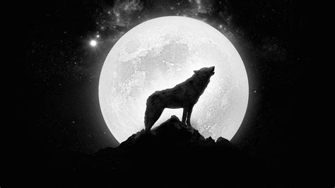 hd wolf wallpapers p  images