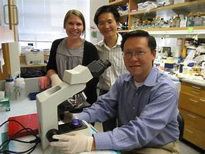 UCLA scientists find molecular switch to prevent ...