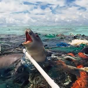 Ocean Plastic Pollution Clean Up