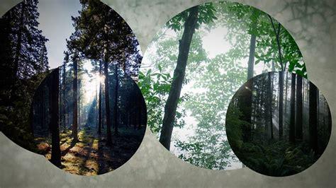 การปลูกป่าใหม่เพื่อแก้ปัญหาตัดไม้ทำลายป่า อาจทำให้เกิดผล ...