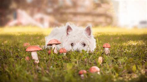 Hund Hat Pilz Im Garten Gefressen tractive gps xl befestigungsklammern jetzt bestellen