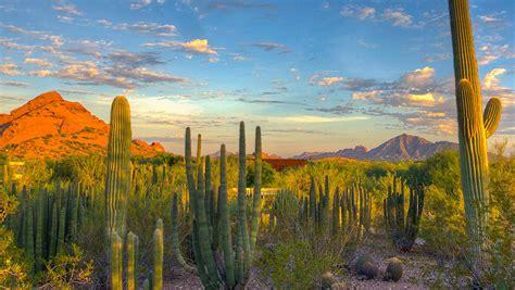 desert botanical garden desert botanical garden central arizona