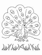 Coloring Pages Peacocks Children Funny Adult Printable Animals Justcolor sketch template
