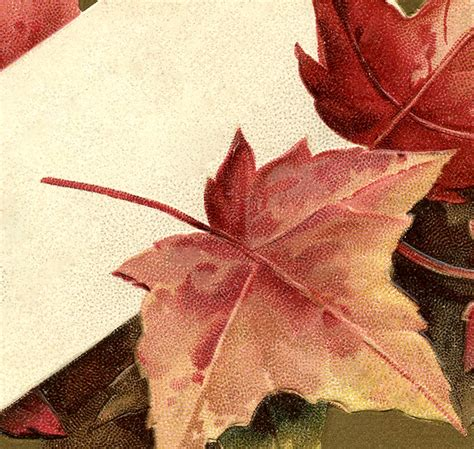 fall leaves images  graphics fairy