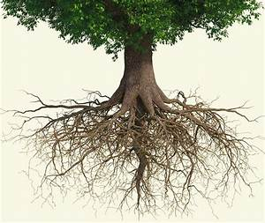 growing roots | Oak Tree Community Church