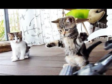 kitten dancing   mop funny cats youtube