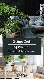 Pflanze Für Dunkle Räume : schwertfarn unbedingt gie en bild 6 in 2020 pflanzen ~ A.2002-acura-tl-radio.info Haus und Dekorationen