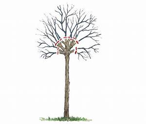 Kugel Trompetenbaum Schneiden : kugelb ume richtig schneiden mein sch ner garten ~ Lizthompson.info Haus und Dekorationen