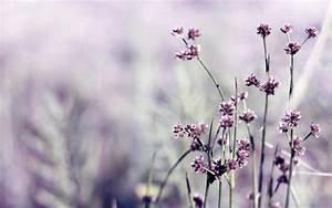 Daily Wallpaper: Little Purple Flowers