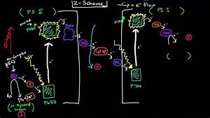Photosynthesis  Part 2 Of 3