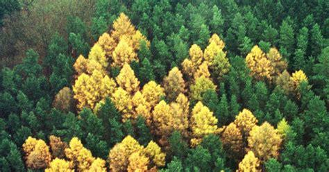 forest swastikas  germany shrouded  mystery ny daily