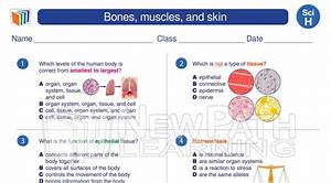 Science  Grade8  Bones  Muscles  And Skin  To View More