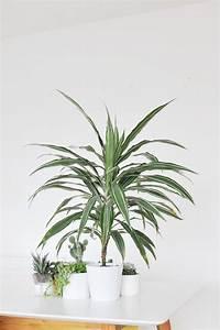 Die besten zimmerpflanzen f r die wohnung bonny und kleid for Die besten zimmerpflanzen