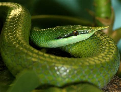 types  snakes animal pictures  facts factzoocom