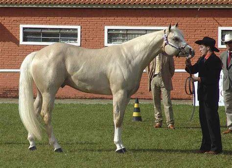 horse breeds most popular quarter