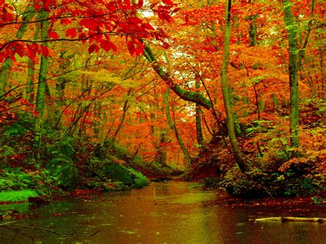 Hd Autumn Background by Autumn Forest River Desktop Background Hd Wallpapers 1560