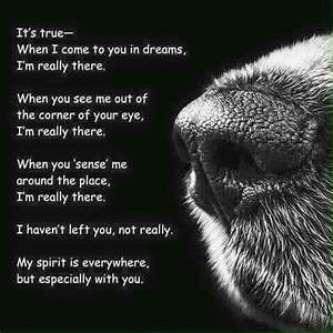 we lost our Dog django today miss you forever my dear dear ...