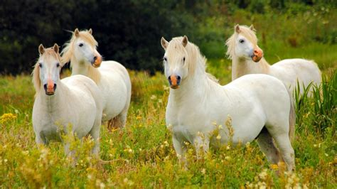 group  horses called referencecom