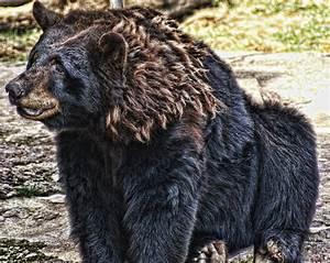 Sitting Bear Photograph by Joe Bledsoe